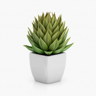Areca Palm live Indoor Air Purify House Plant